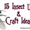 1-insect unit and craft ideas