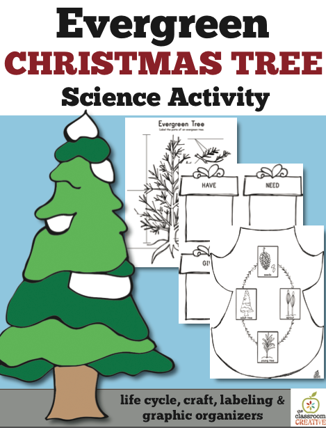 Christmas evergreen activity