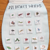 insect unit anchor chart
