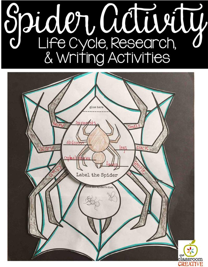 spider activity life cycle science writing